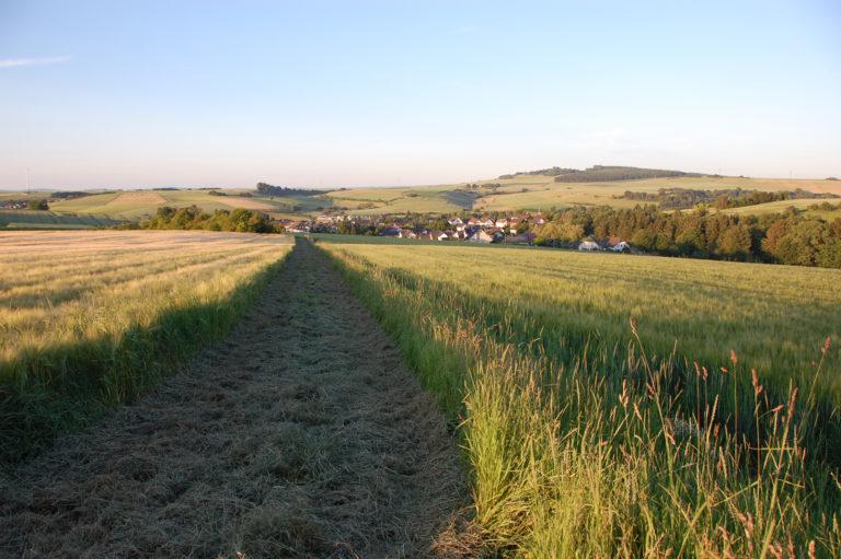 Sommerfeld mit Blick auf Flacht