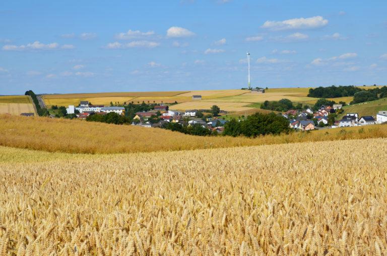 Sommerfeld mit Blick auf Holzheim