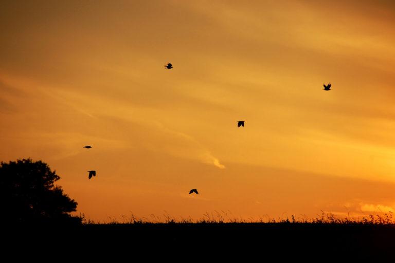 Sonnenuntergang in Flacht