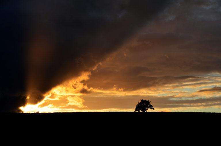 Baum mit Gewitterwolken Flacht