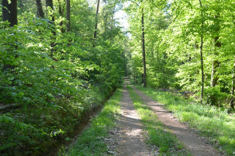 Waldweg Flacht